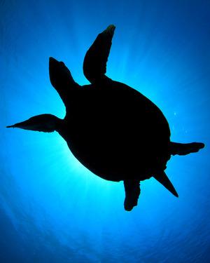 turtle_2_160x200 2